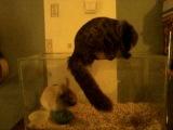 мой кроль Кроша и кот Шустрик